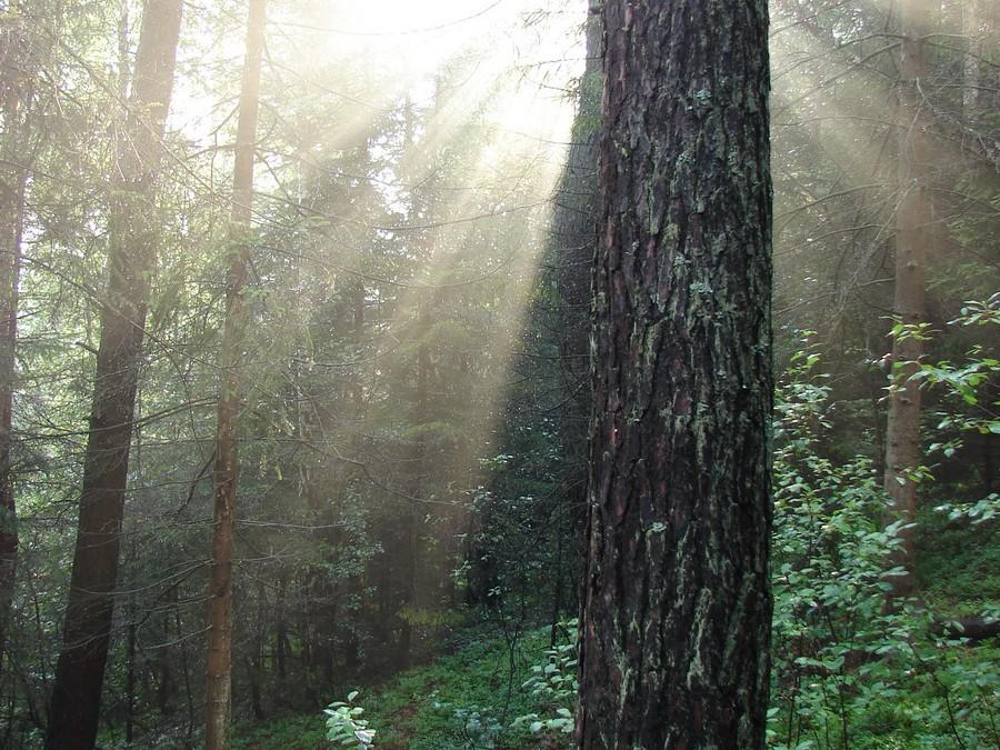 Lasy - beskidzkie bogactwo